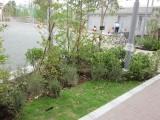 植栽と芝生