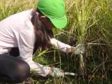 5年 稲刈り体験