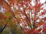 小さい秋~紅葉・黄葉の彩り