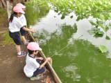 1年生 蓮池でザリガニ釣り