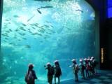2015年度 1年生秋の遠足 新江ノ島水族館