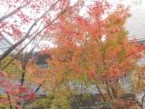 湘南・鵠沼、初冬の佇まい