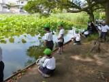 はす池ザリガニ