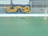 冬のプールにカモ1羽