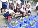 湘南学園小学校 ひまわりプロジェクト