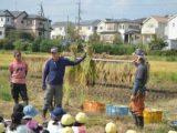 5年生 稲刈り ~収穫の喜び~