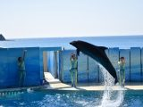 1年生 新江ノ島水族館見学