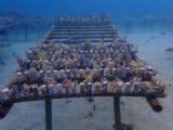 サンゴを救え!プロジェクト③