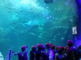 1年生校外学習@新江ノ島水族館