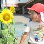 7月の幼稚園