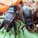 第17回 昆虫をめぐる不思議な神秘の世界①