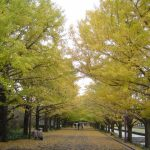 第56回 小春日和~紅葉・黄葉の美しさ
