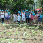 第119回 非認知能力を伸ばす学園の幼児教育